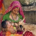 राजस्थान का बिश्नोई समाज