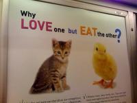 phoca_thumb_l_kitten_chick